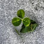 February clover
